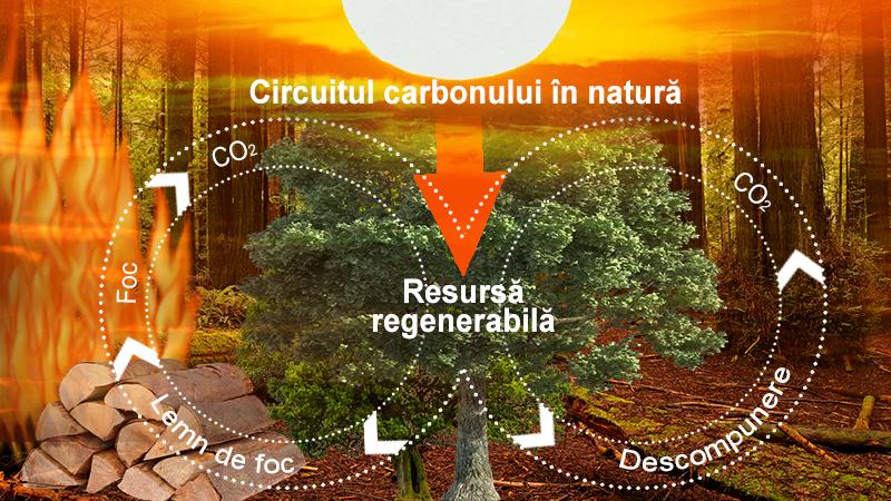Lemnul, resursa regenerabila